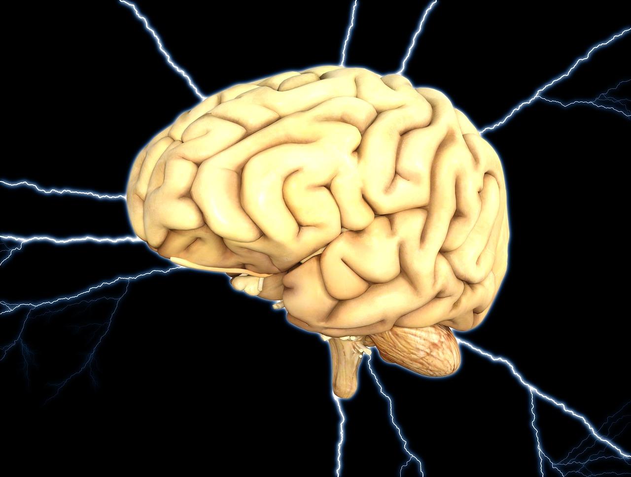 「依存症」を発症させる脳の仕組み