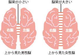 男性脳と女性脳の構造