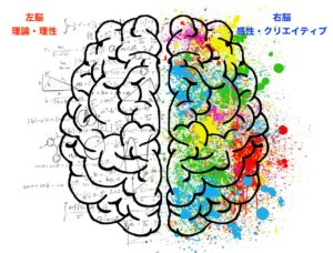 男性脳と女性脳の使い方の違いを知る